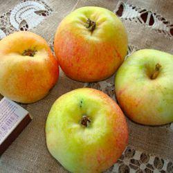 Яблоня Конфетное (полу-карликовый подвой)