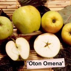 Яблоня Отон Омена