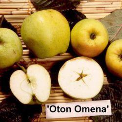 Отон Омена