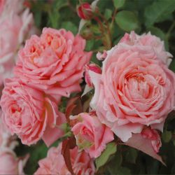 Fleurs en Seine (Massad)