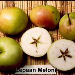 Яблоня Лепаан Мелони